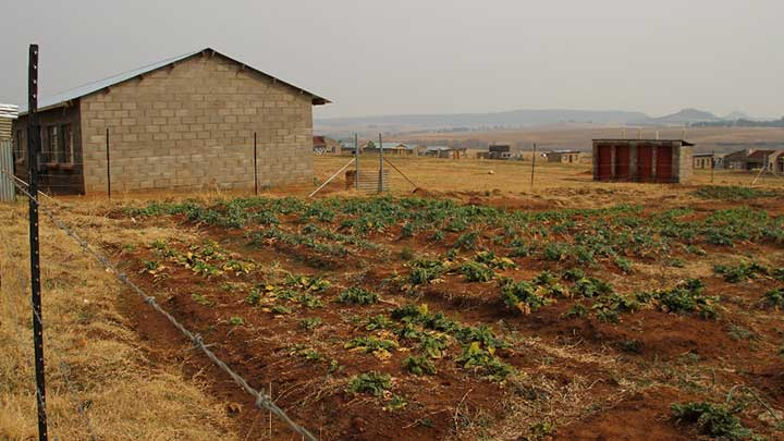 Garden outside of classroom in the Kindom of Lesotho